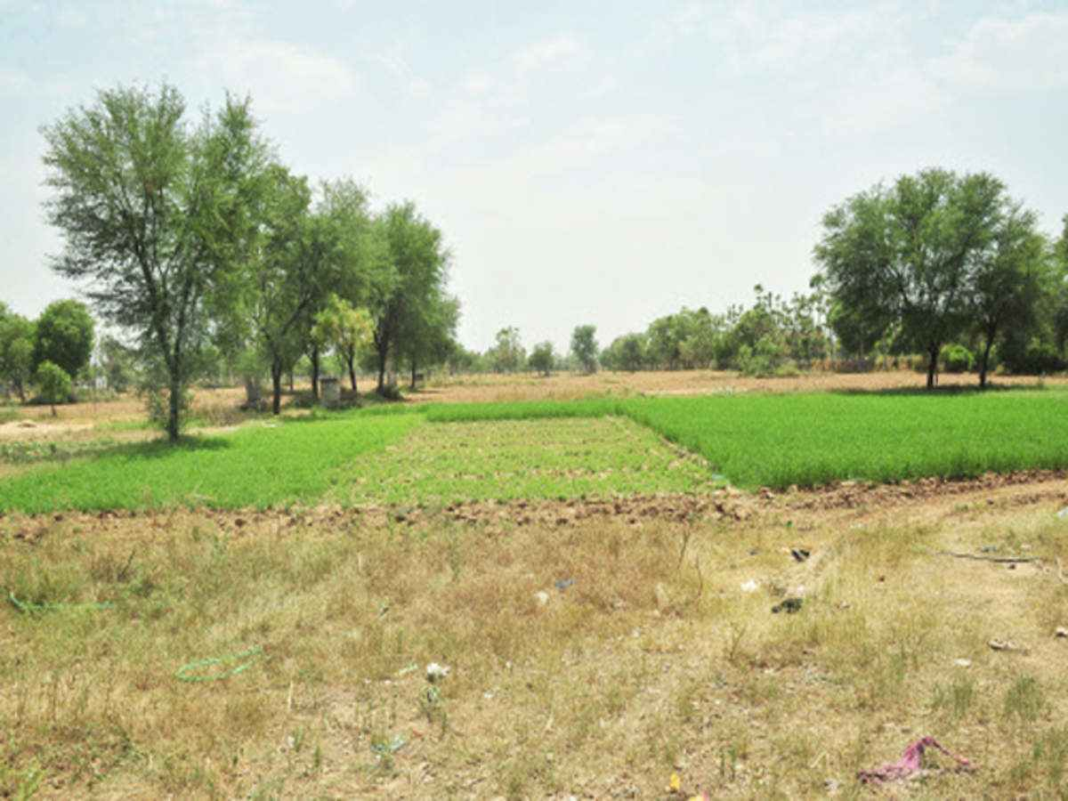 120 ACRE AGRICULTURE PLOT   LAND FOR SALE IN BECHARAJI , VITHALAPUR MEHSANA – 9825249510