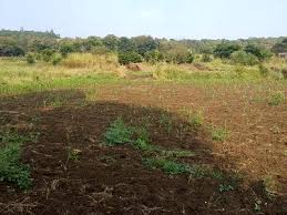 20000 SQ.YRD AGRICULTURE LAND | PLOT FOR SALE IN VITHALAPUR , BECHARAJI MEHSANA – 9825249510