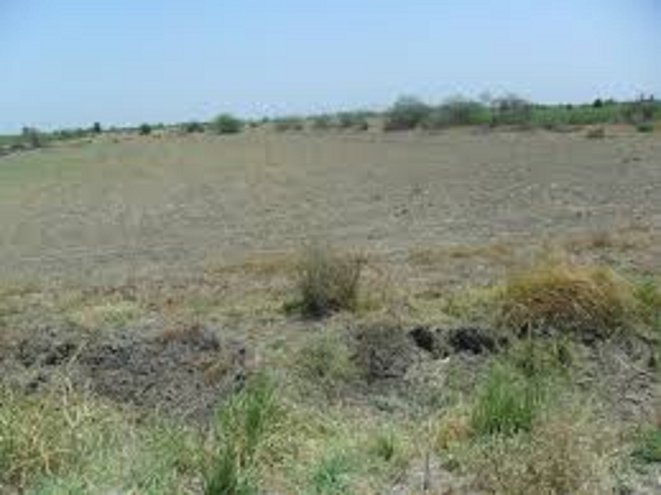 Industrial Land Agent in Sanand, Ahmedabad